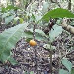 Aménager son jardin avec des arbres fruitiers