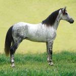 Apprenez à mieux comprendre le cheval avec un stage d'initiation à l'équitation éthologique