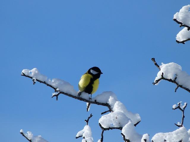 C'est l'hiver, restez couvert et protégez-vous du froid !