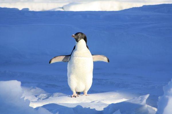 Site pénalisé par Pingouin ? Que faire ?