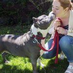 Fini l'adoption de Pitbull à Montréal, la SPCA s'inquiète