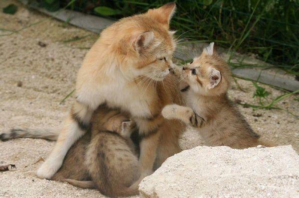 le-parc-des-felins-lumigny-nesles-ormeaux-1360256418