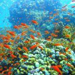 Les océans, victimes du réchauffement climatique