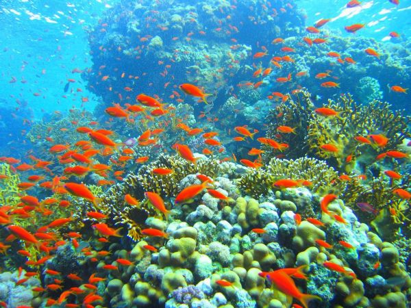 ob_d8e9a5_coral-reef-in-ras-muhammad-nature-park