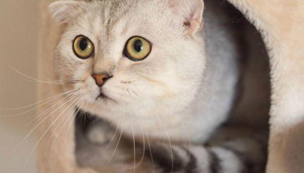 cat-938667_1280_0