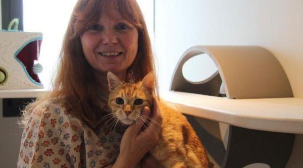 un-hotel-de-luxe-pour-les-chats-vient-douvrir