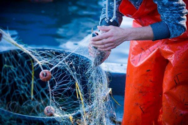 Pêche traditionnelle au pélagique : les méthodes