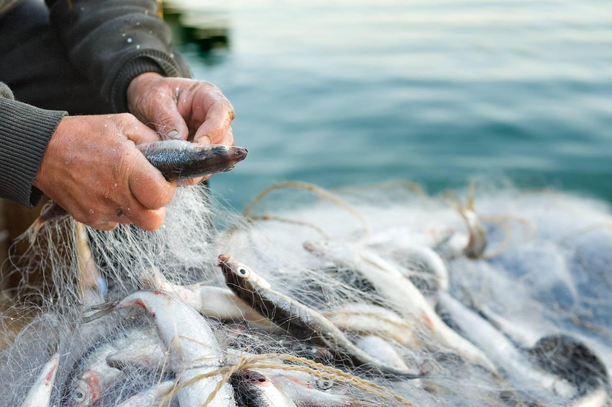 pêche traditionnelle au pélagique